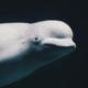 aires-marines-protegees-une-progression-a-pas-de-tortue