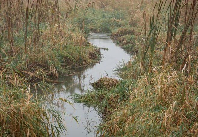 Milieux-naturels-milieux-humides-4