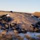 les-sols-contamines-au-quebec-petite-histoire-dun-passif-environnemental-meconnu