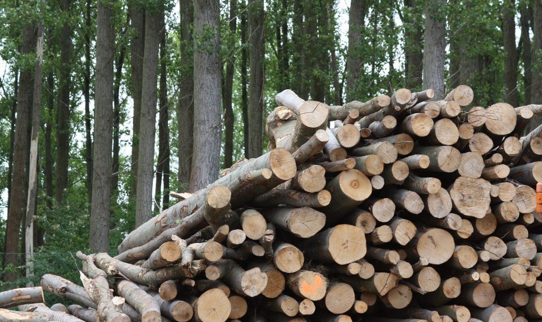 implantation-du-chauffage-a-la-biomasse-forestiere